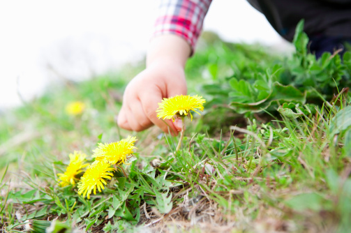 优质论文 | 如何在自然科学教育活动中提高大班幼儿观察能力?