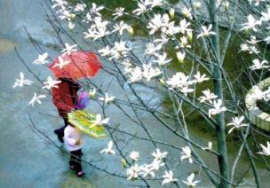 二十四节气 第二节 | 雨水,最是一年春好处