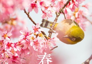 二十四节气第四节 | 春分:乾坤平分昼夜,却是燕子来时
