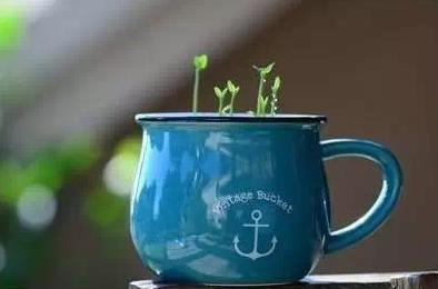 植树节,一个探索植物生长奥秘的好时节