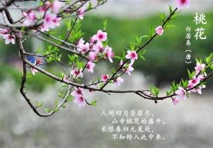 春季主题活动 | 春天的秘密
