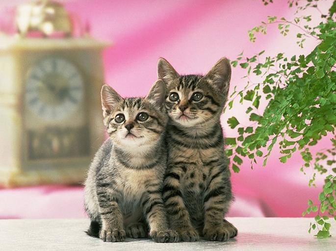 领域音乐活动 小花猫照镜子