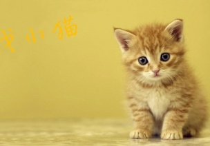 小班艺术领域音乐游戏 《找小猫》