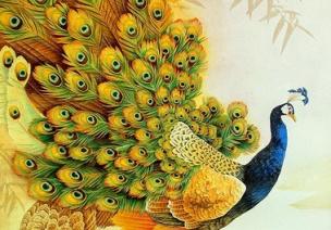 教案 | 中班艺术领域美术活动《美丽的孔雀》