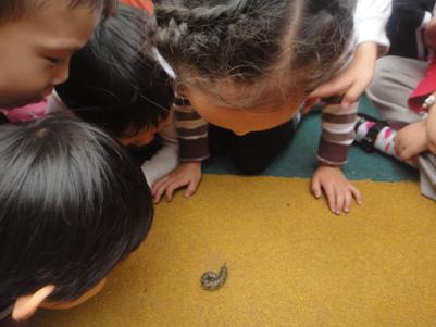 教育随笔 | 虫虫观察记