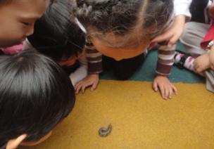 教育隨筆 | 蟲蟲觀察記