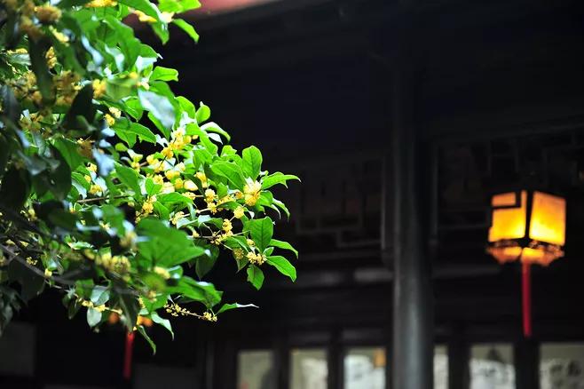 二十四节气第16节 | 秋分:丹桂飘香,蟹肥菊黄
