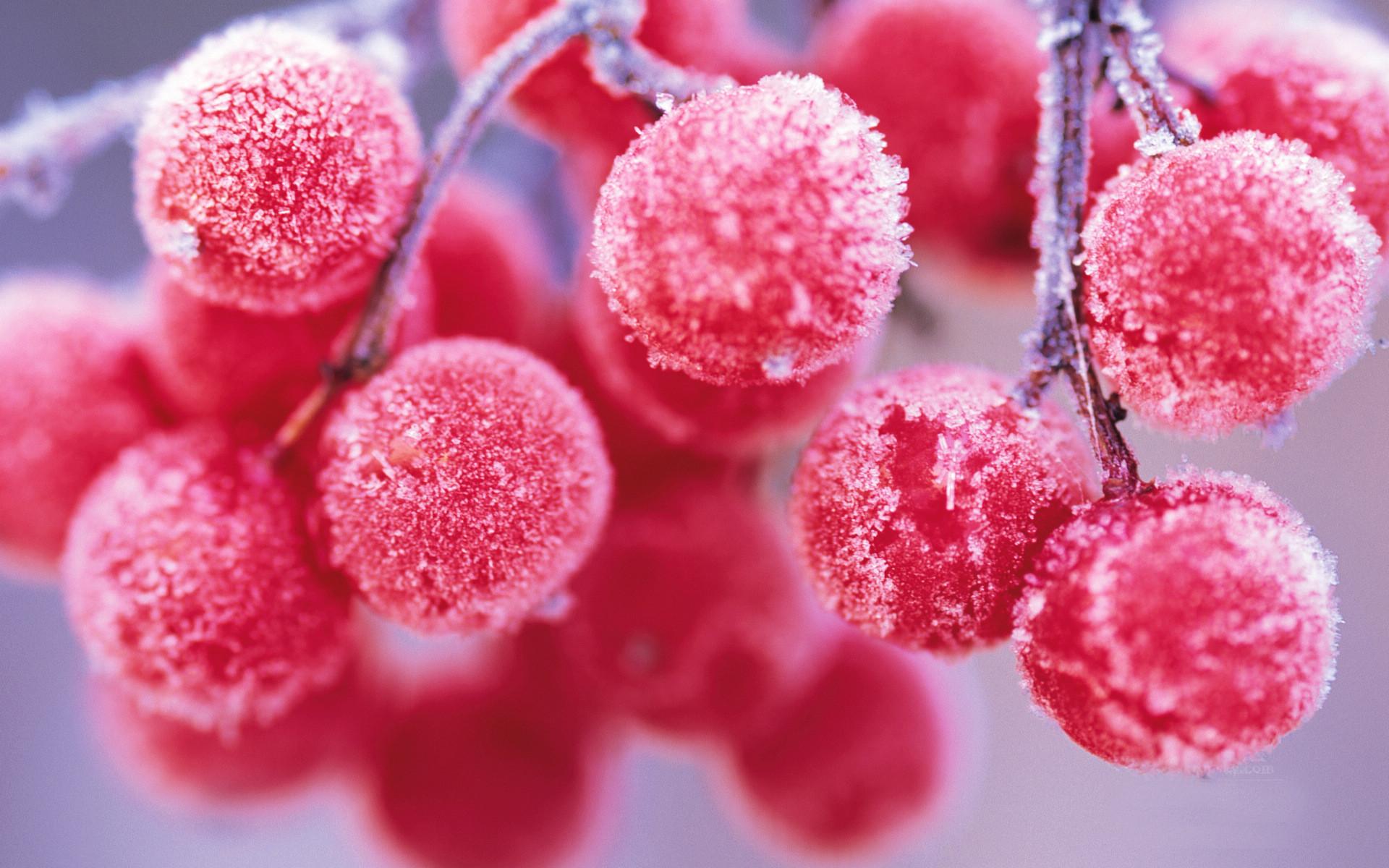 二十四节气第18节 | 霜降:风紧草木枯,跟秋天道别吧