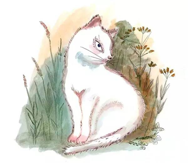 绘本欣赏 | 《活了一百万次的猫》