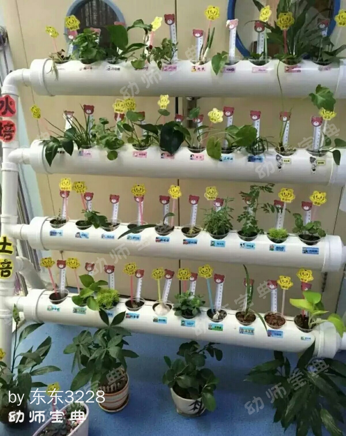 自然角 | 植物角里的春天