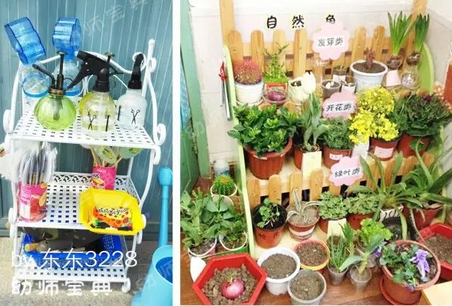 自然角 | 一起去幼儿园的植物角寻找春天吧!