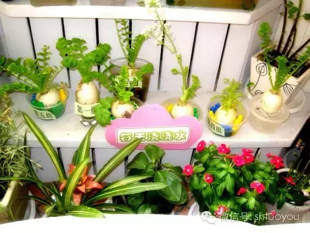 自然角 | 暖暖的春风迎面吹,花儿朵朵开~