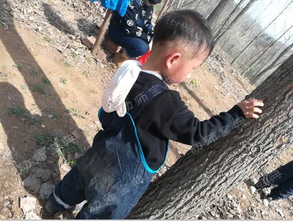 户外自然课程   《神奇的树皮》