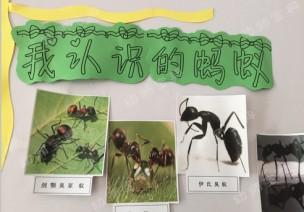主题墙 | 《我的蚂蚁朋友》