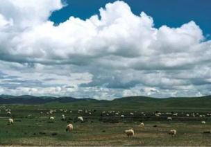 看云识天气 | 这些云你都认识吗?它们能预测哪些天气?