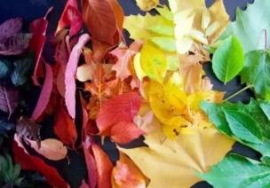 科學小實驗 | 樹葉為什么會變色?