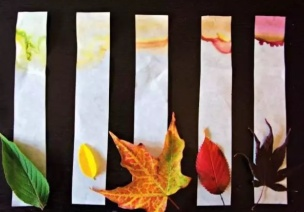 科学小实验 | 树叶为什么会变色?