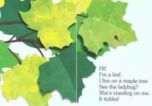 绘本欣赏 | 关于叶子的绘本《I Am a Leaf》