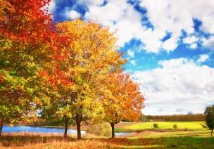 大班综合活动 | 常青树与落叶树