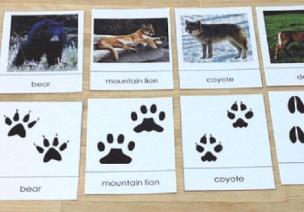 科探区 | 8个主题,让孩子尽情探索冬天的秘密(附投放材料)