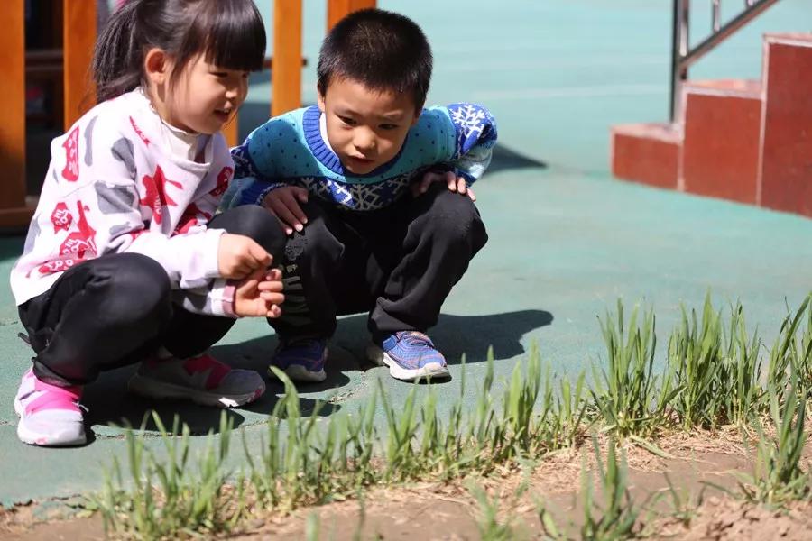 植树节活动 | 与孩子们一起将环保进行到底!