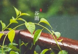 谷雨 | 谷雨时节,养生就该从娃娃抓起!
