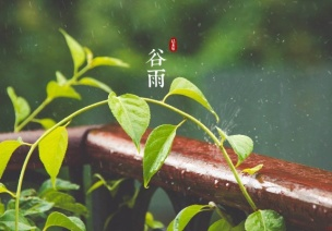 谷雨活动 | 12个好玩的节气活动,带你遵循自然的规律慢下来