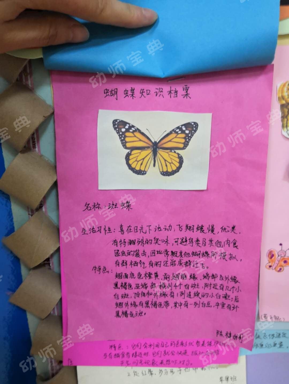 课程故事 | 蝴蝶,蝴蝶,我想知道你的故事!