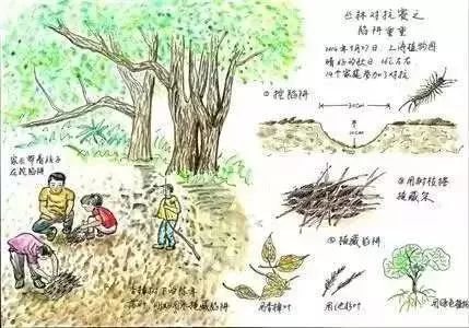 父母必读 | 0-12岁,孩子的自然教育计划