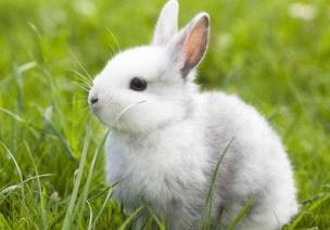 中班科學領域活動 |《動物們怎么避暑?》