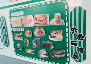 主題墻 | 牙齒的秘密真不少,我們一起來探討