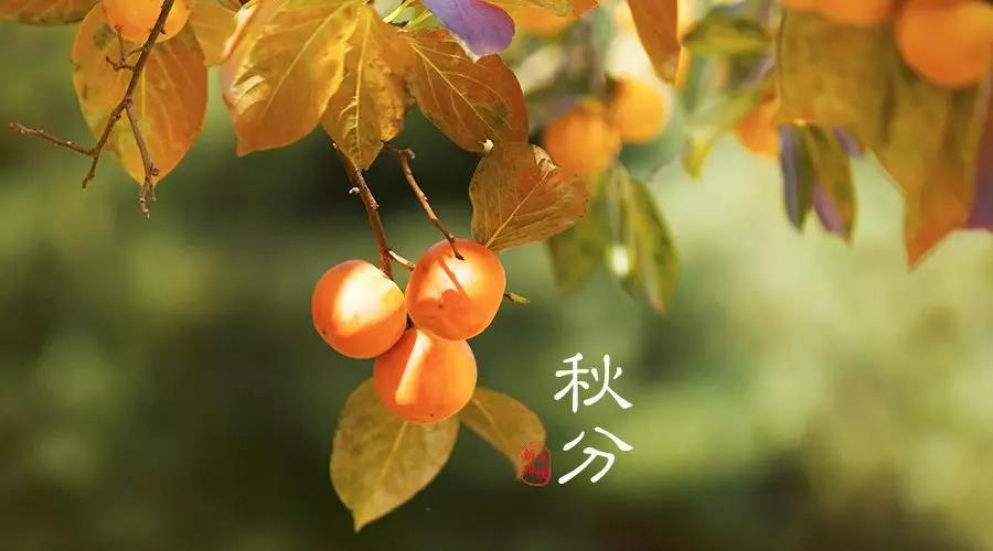秋分節氣活動 | 這9個有趣的節氣活動,給你帶來秋日的小確幸