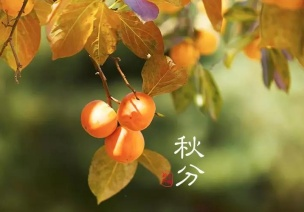 秋分节气活动 | 这9个有趣的节气活动,给你带来秋日的小确幸