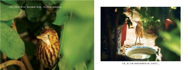 绘本共读时光 | 秋天啦,请爱惜这些自然生命呀!