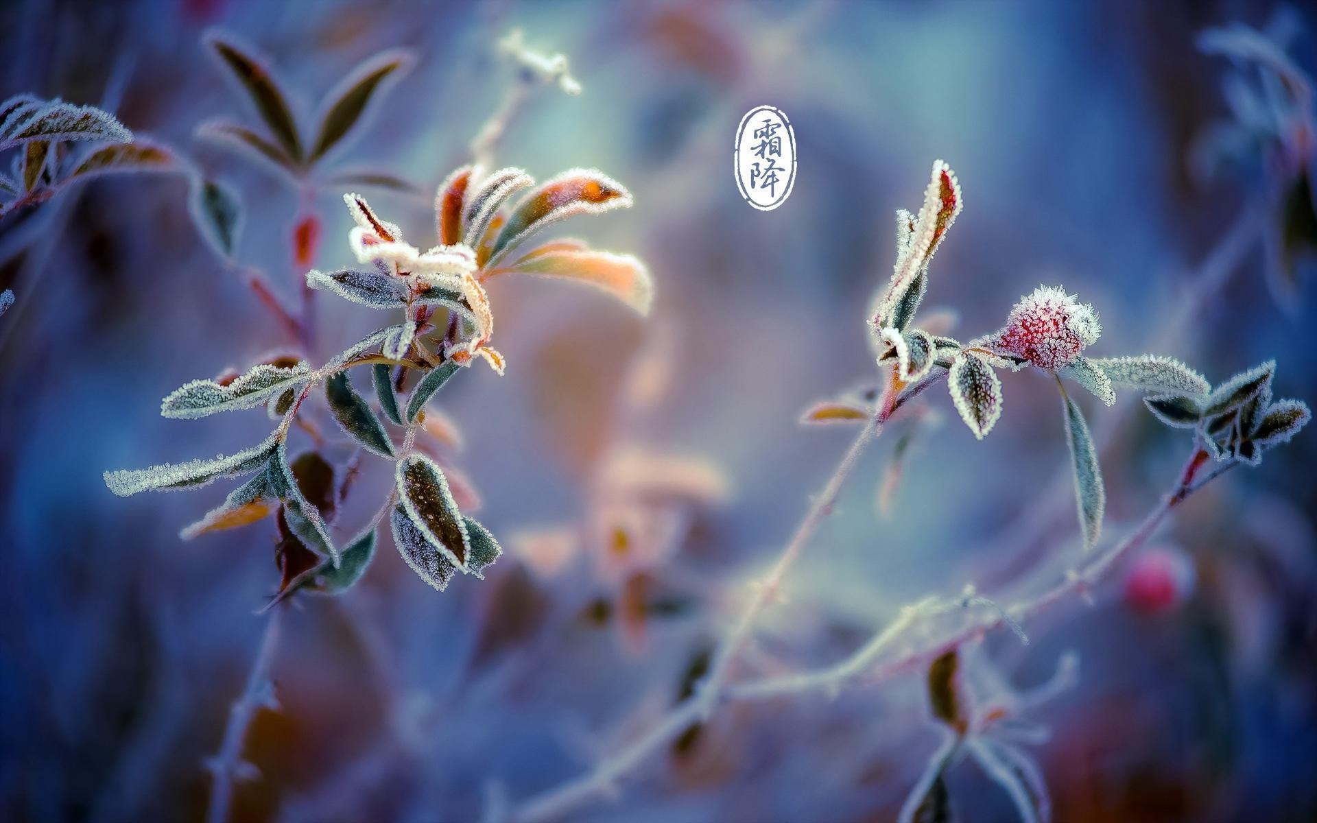 霜降节气活动 | 这8个好玩的活动,带你感受秋的清丽