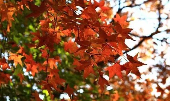 霜降節氣活動   這8個好玩的活動,帶你感受秋的清麗
