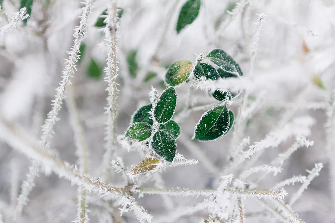 小雪节气活动 | 这8个有趣的节气活动,带你领略寒冬的色彩