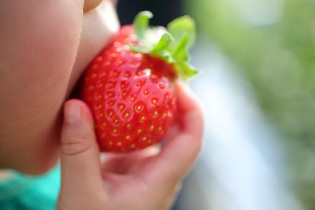 寒假安全 | 摘草莓雖好,可這些問題還需注意