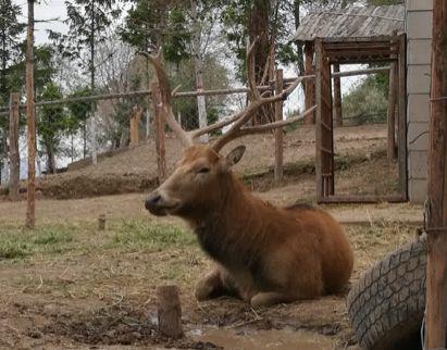 妈妈,野生动物还是我们的朋友吗?