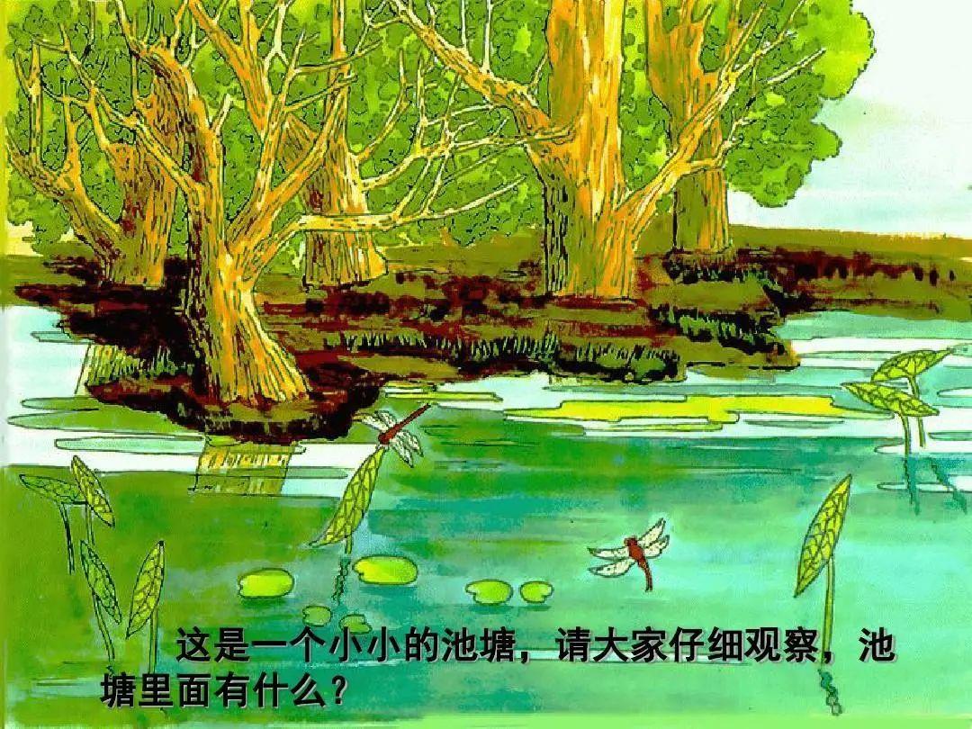中班語言領域活動 |《小池》中華民族文化從娃娃開始傳承